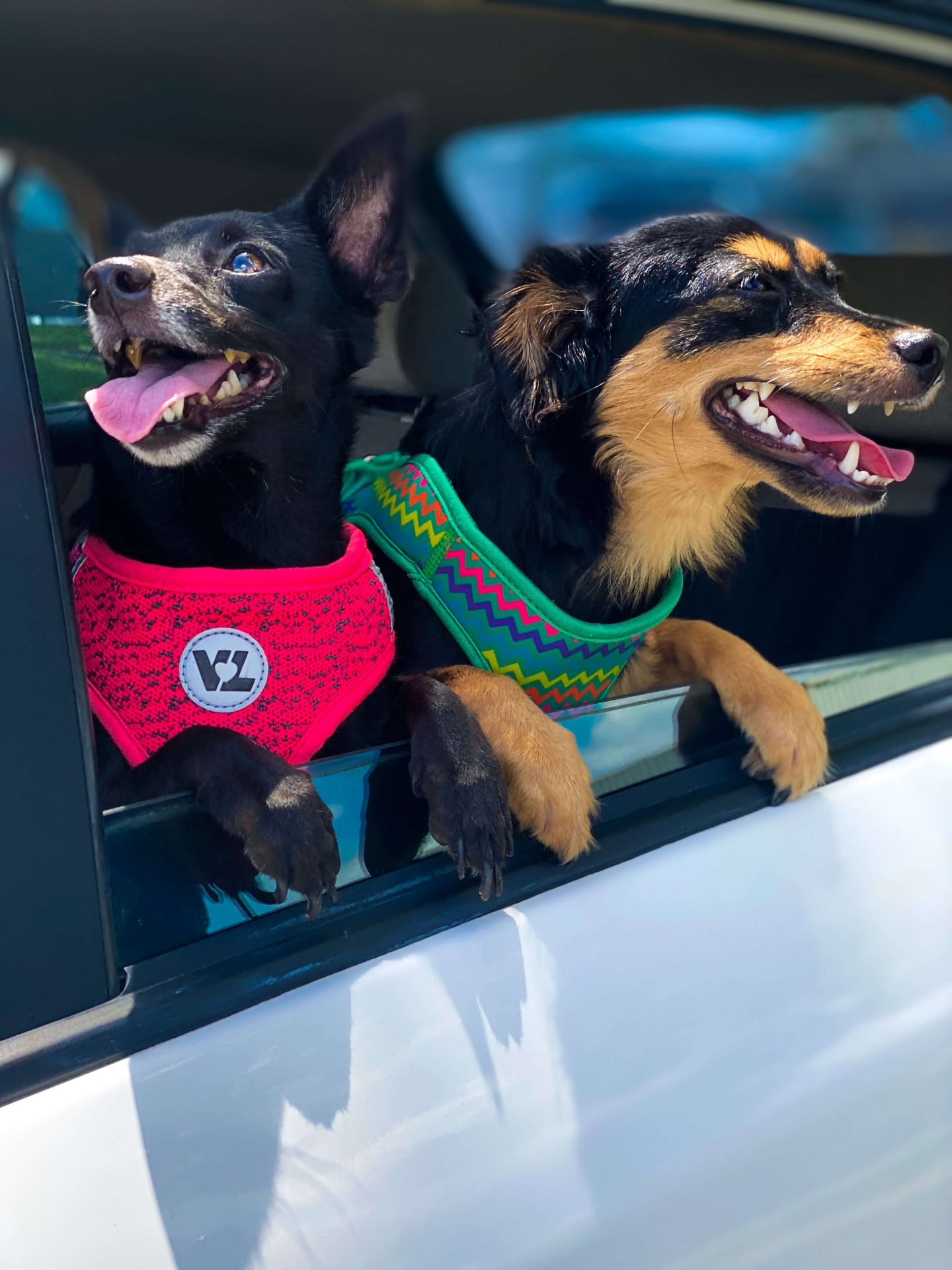 Road Trip Checklist For Dogs