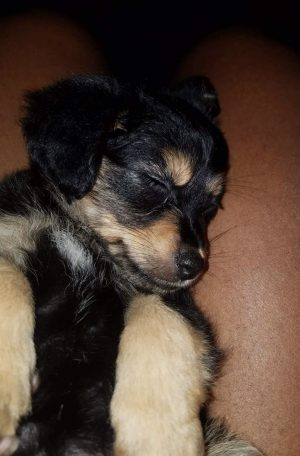 Parker as a puppy